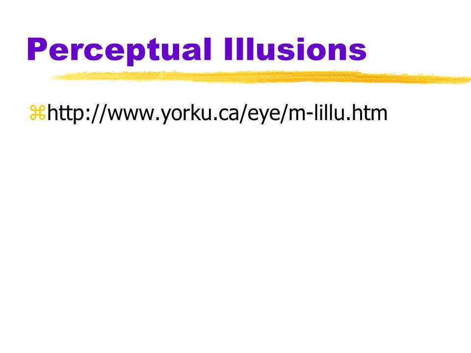 Perceptual Illusions http://www.yorku.ca/eye/m-lillu.htm