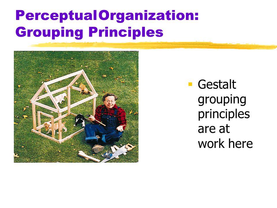 Perceptual Organization: Grouping Principles