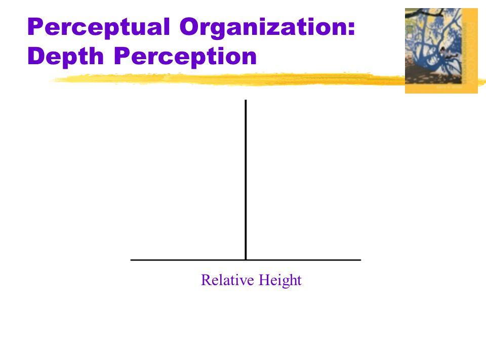 Perceptual Organization: Depth Perception
