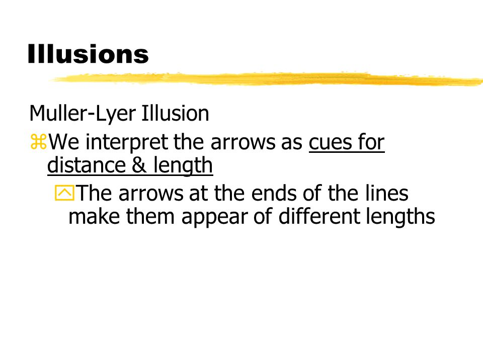 Illusions Muller-Lyer Illusion