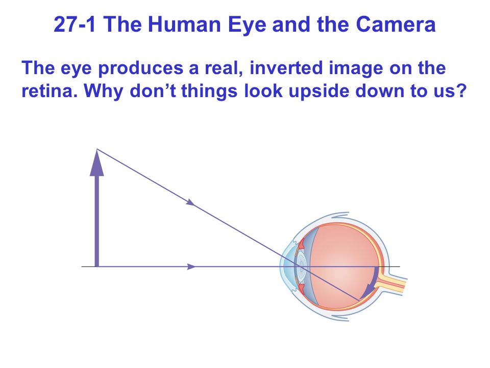 27-1 The Human Eye and the Camera
