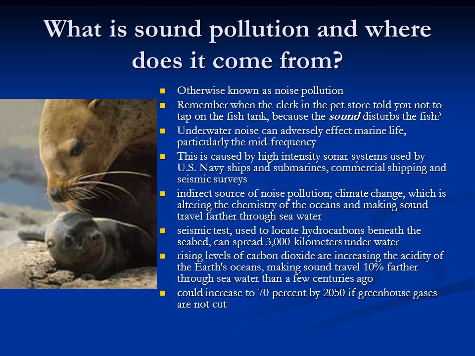 What is sound pollution and where does it come from