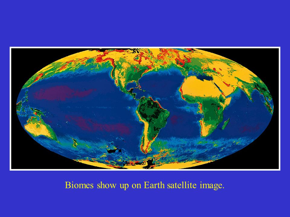 Biomes show up on Earth satellite image.