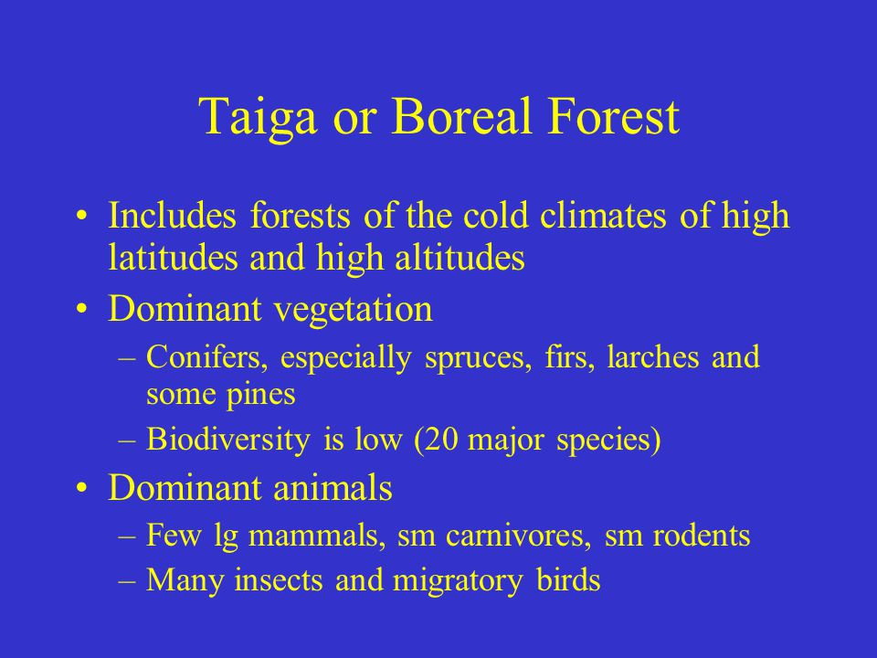 Taiga or Boreal Forest Includes forests of the cold climates of high latitudes and high altitudes. Dominant vegetation.