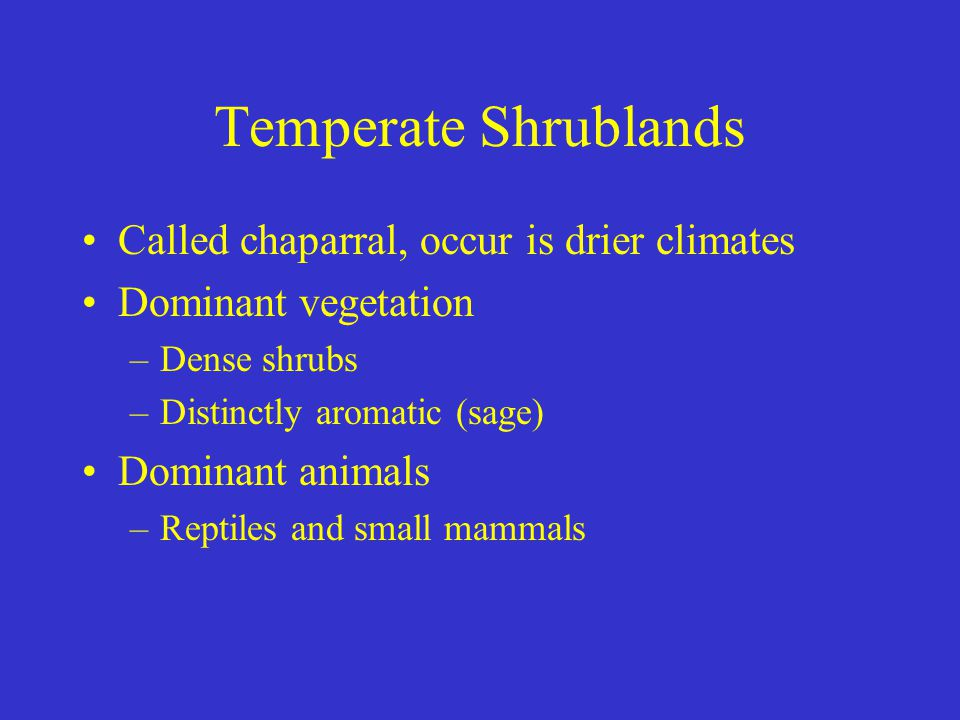 Temperate Shrublands Called chaparral, occur is drier climates