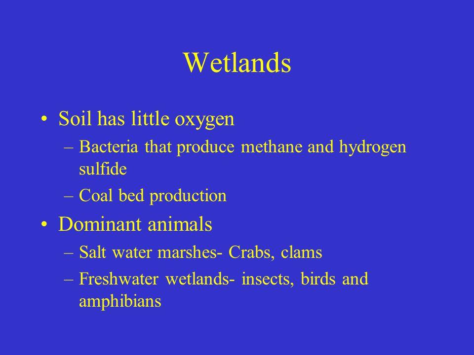Wetlands Soil has little oxygen Dominant animals
