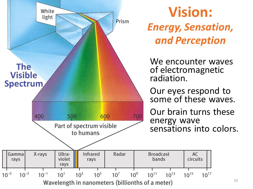 Vision: Energy, Sensation, and Perception