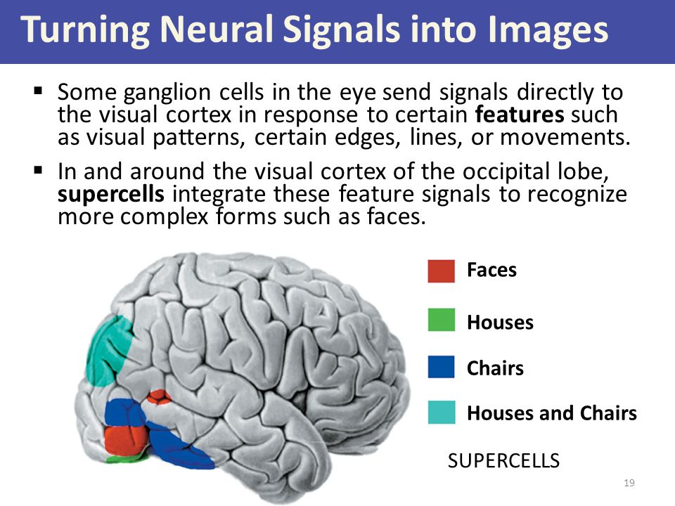 Turning Neural Signals into Images