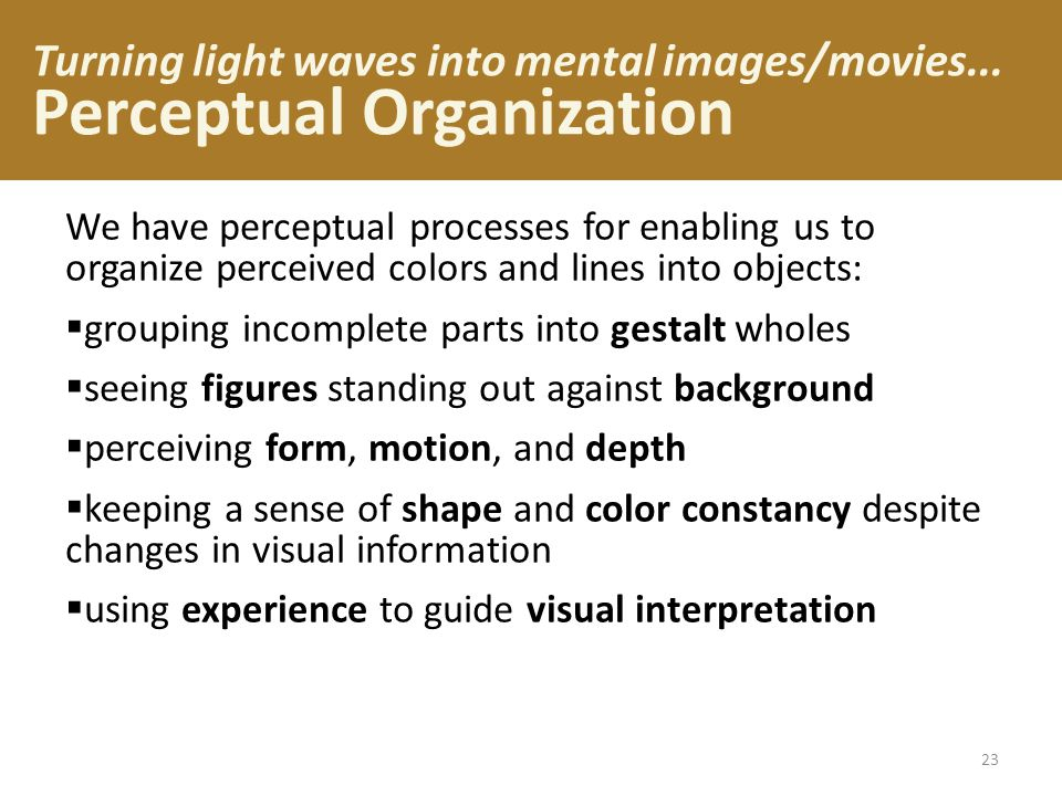 Turning light waves into mental images/movies... Perceptual Organization