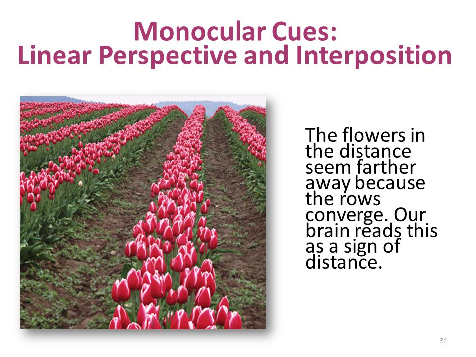 Monocular Cues: Linear Perspective and Interposition