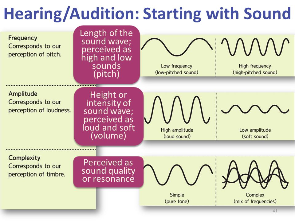 Hearing/Audition: Starting with Sound