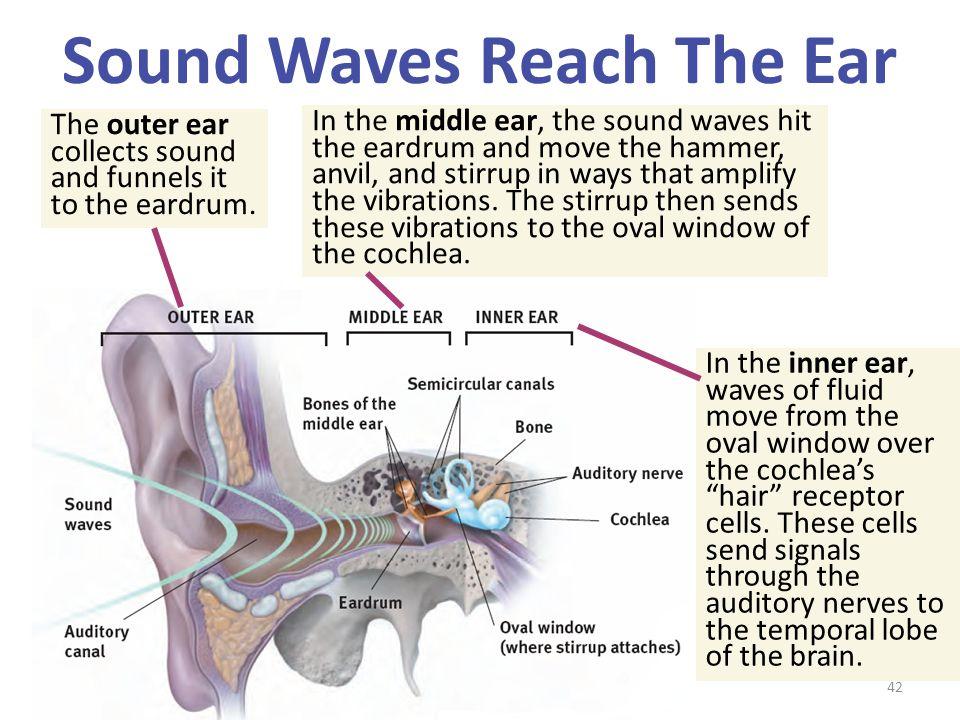 Sound Waves Reach The Ear
