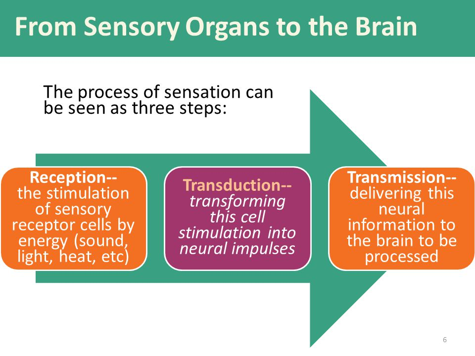 From Sensory Organs to the Brain