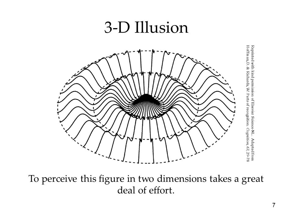 3-D Illusion Reprinted with kind permission of Elsevier Science-NL. Adapted from.