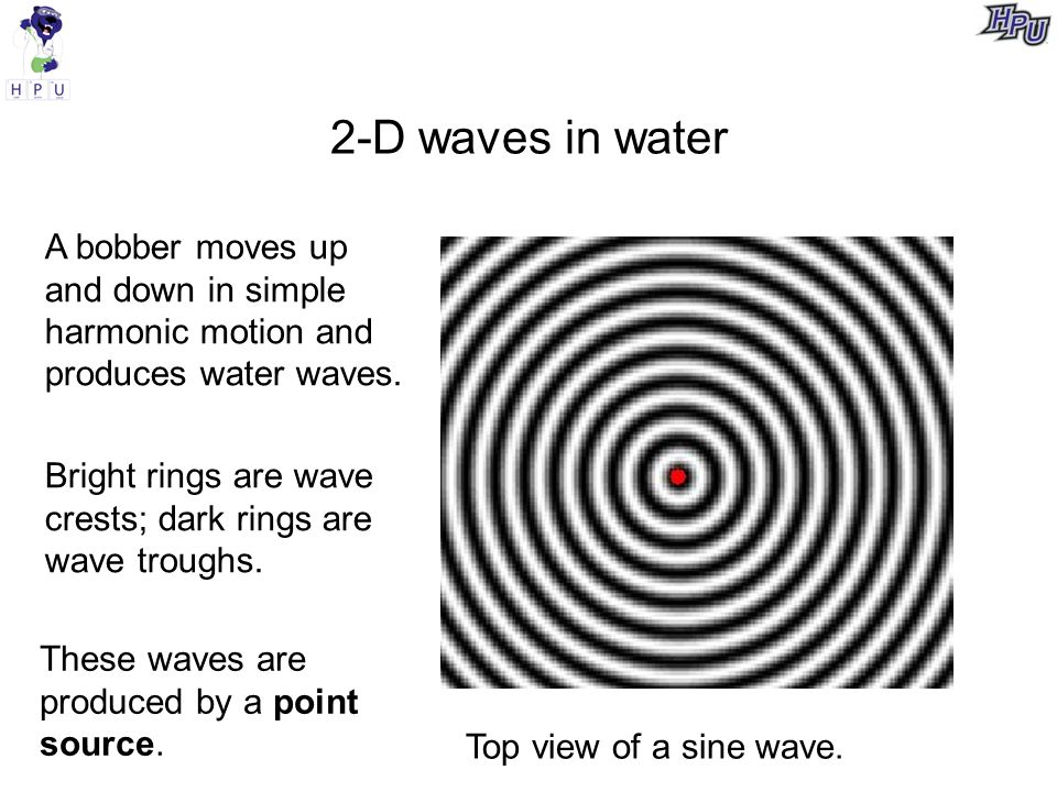 2-D waves in water A bobber moves up and down in simple harmonic motion and produces water waves.
