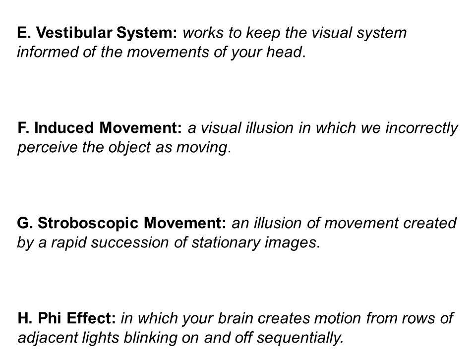 E. Vestibular System: works to keep the visual system