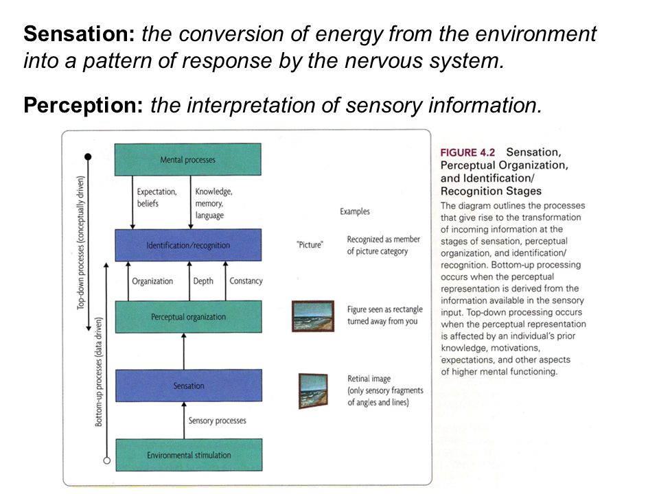 Sensation: the conversion of energy from the environment