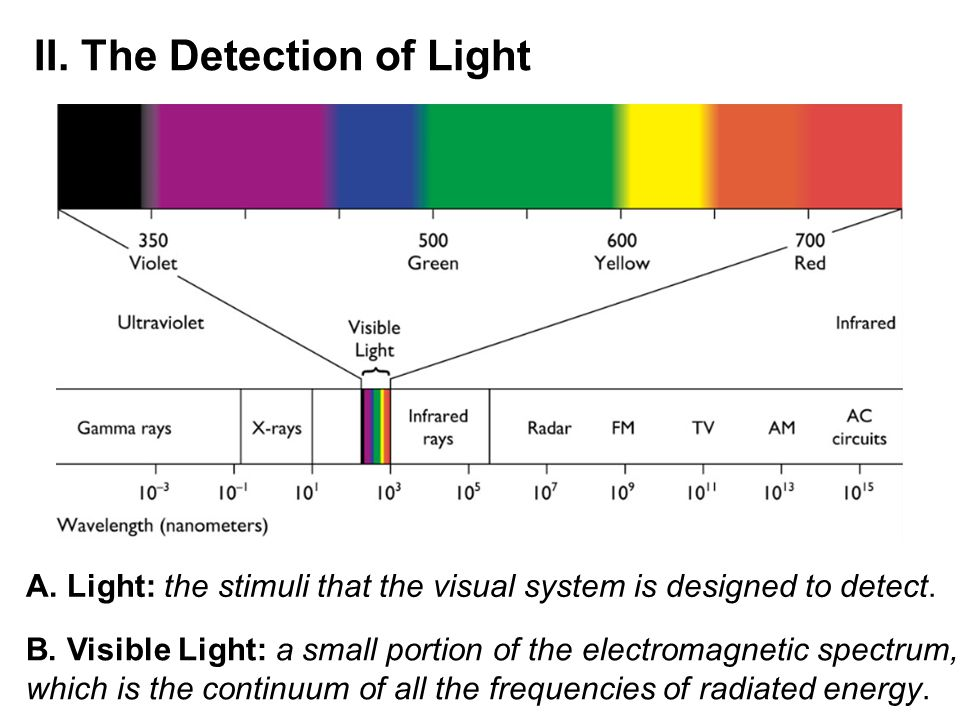 II. The Detection of Light