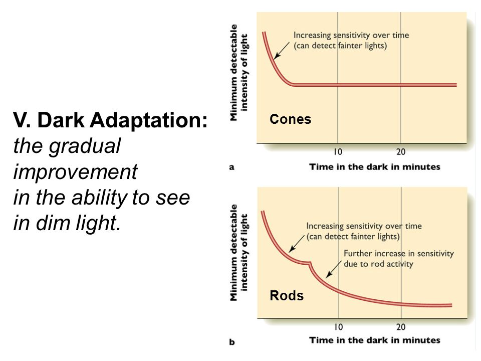 V. Dark Adaptation: the gradual improvement in the ability to see