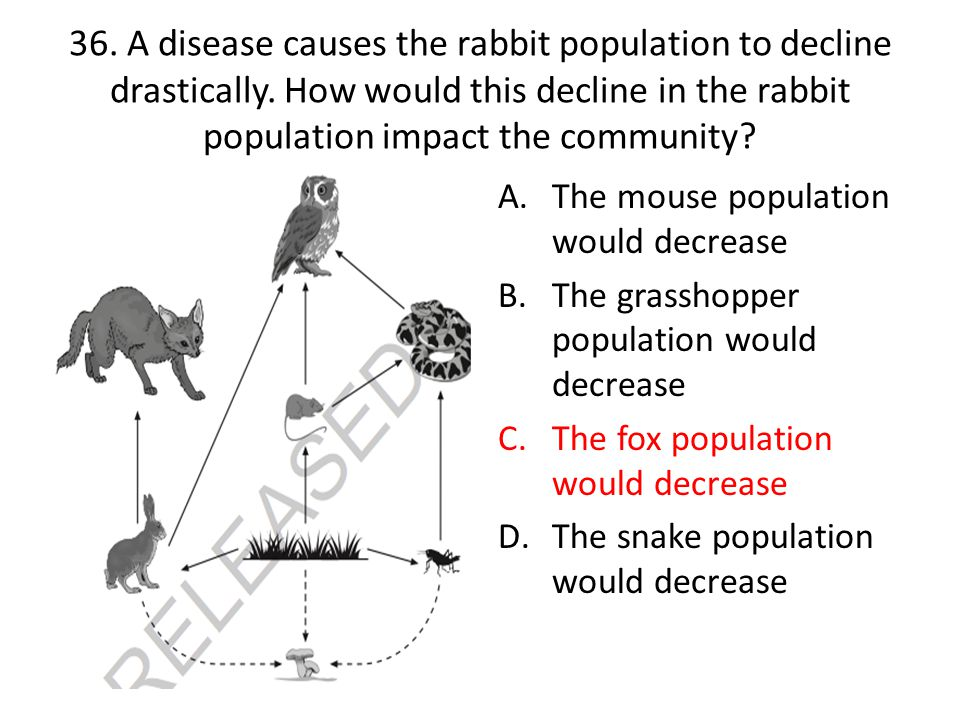 36. A disease causes the rabbit population to decline drastically