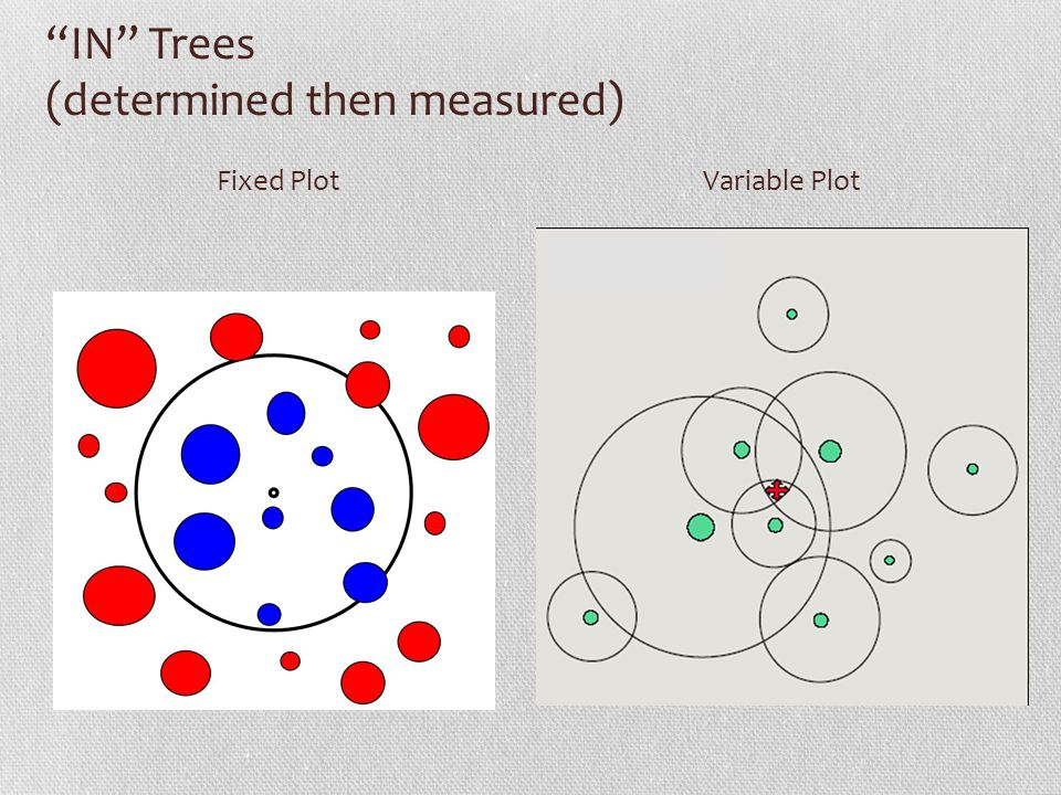 IN Trees (determined then measured)