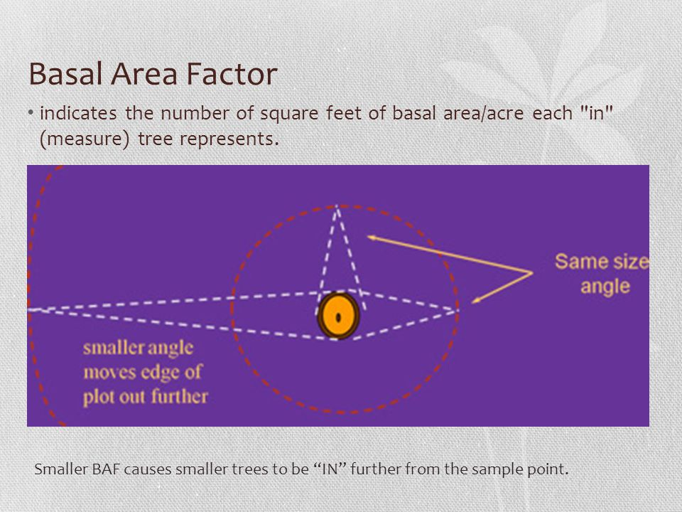 Basal Area Factor indicates the number of square feet of basal area/acre each in (measure) tree represents.