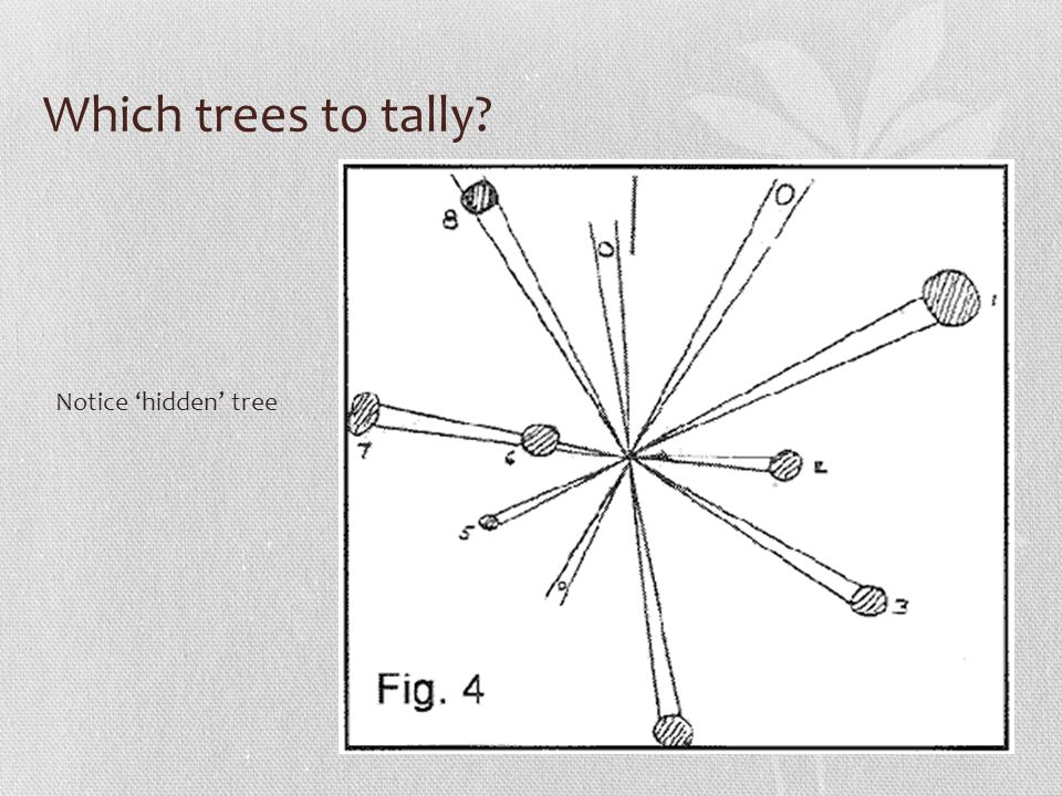 Which trees to tally Notice 'hidden' tree