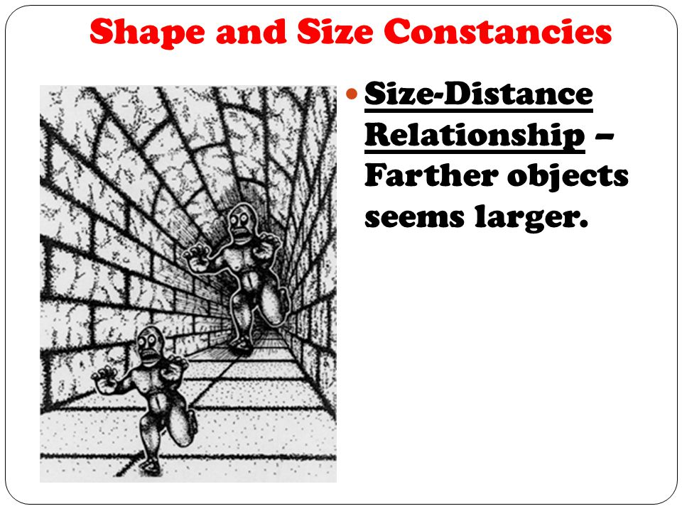 Shape and Size Constancies