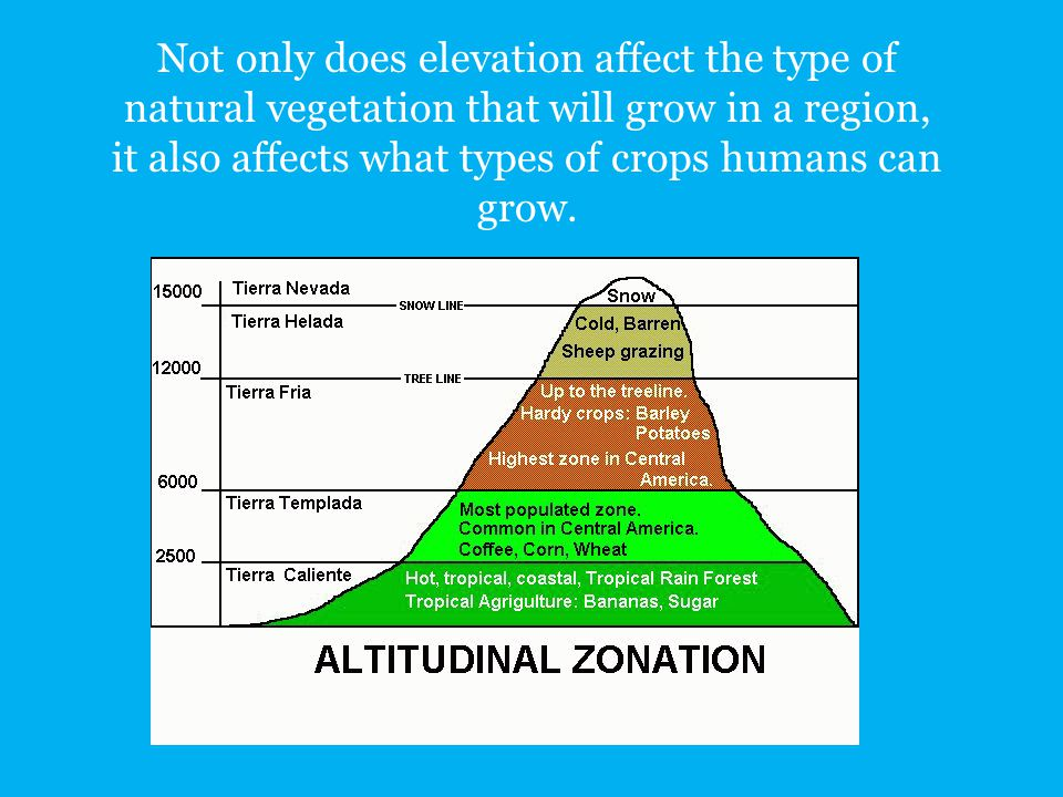 Not only does elevation affect the type of natural vegetation that will grow in a region, it also affects what types of crops humans can grow.