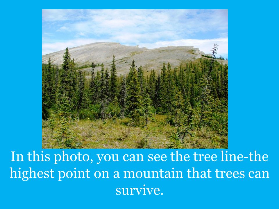 In this photo, you can see the tree line-the highest point on a mountain that trees can survive.