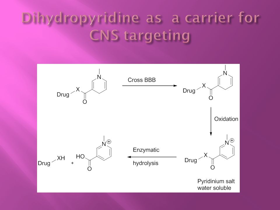 Dihydropyridine as a carrier for CNS targeting