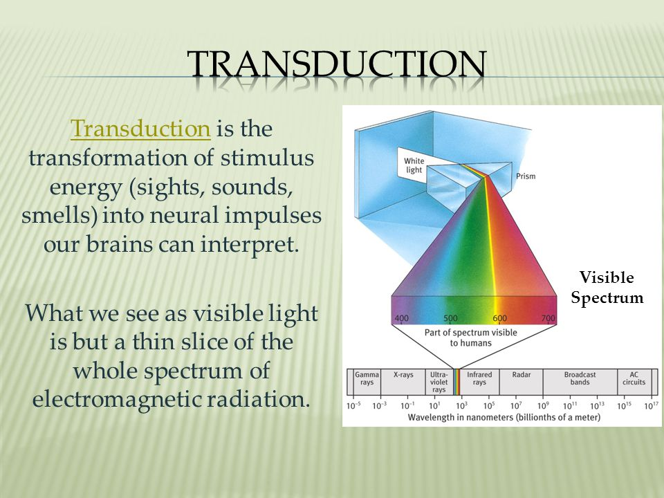 Transduction Visible. Spectrum.