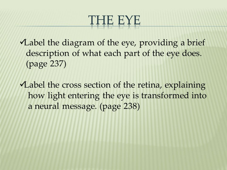The Eye Label the diagram of the eye, providing a brief