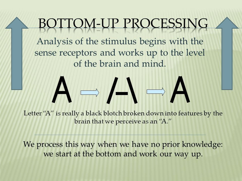 Bottom-up Processing Analysis of the stimulus begins with the sense receptors and works up to the level of the brain and mind.