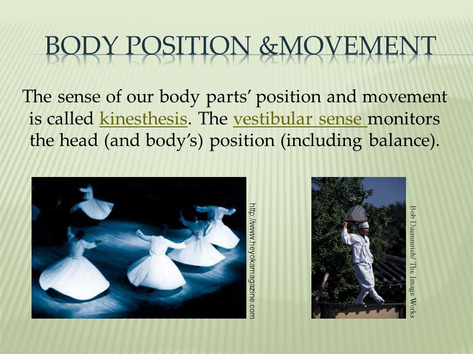 Body Position &Movement