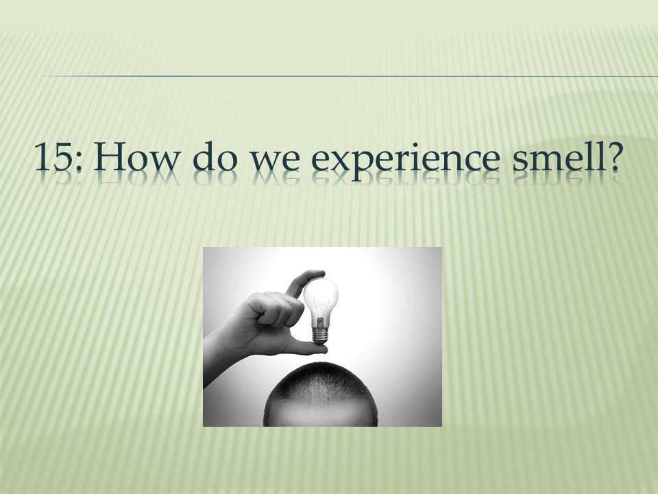 15: How do we experience smell