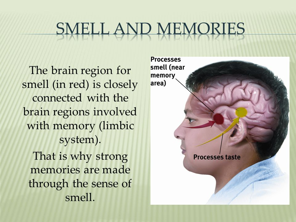 That is why strong memories are made through the sense of smell.