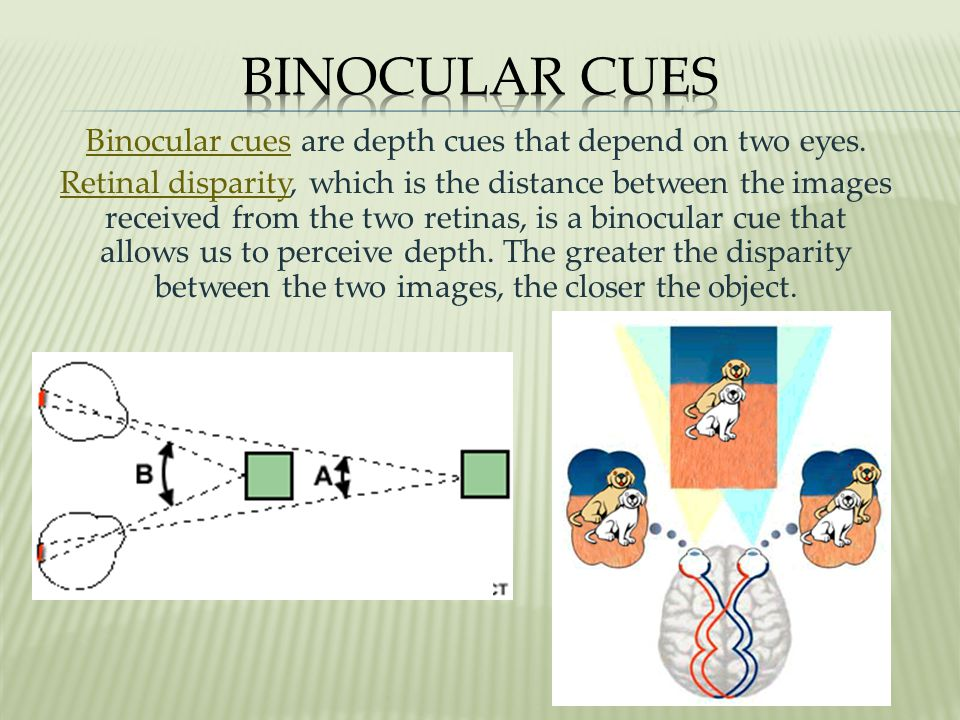 Binocular cues are depth cues that depend on two eyes.