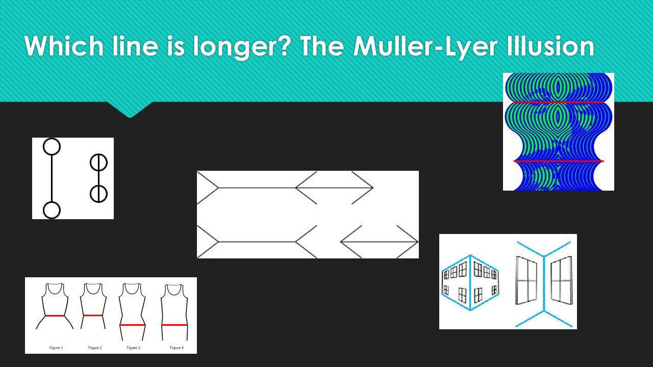 Which line is longer The Muller-Lyer Illusion