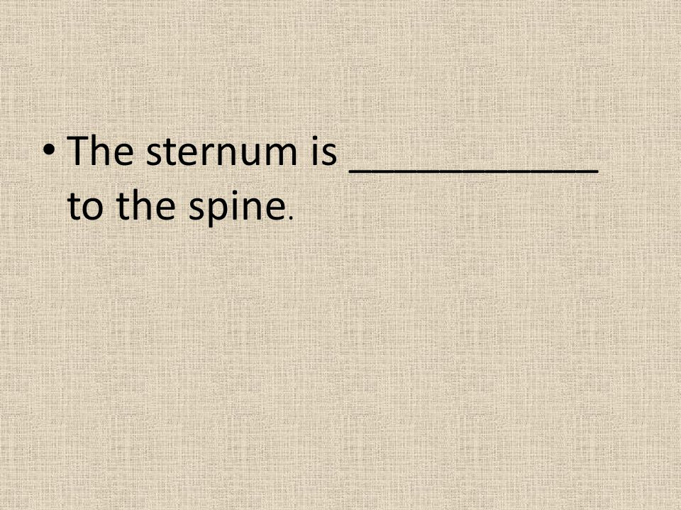 The sternum is ___________ to the spine.