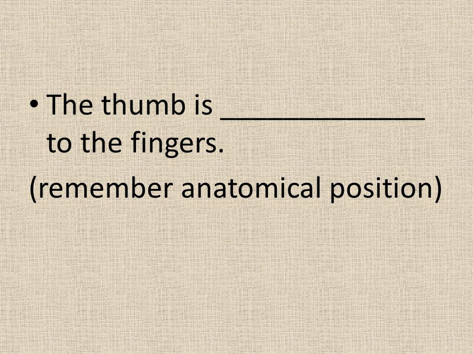 The thumb is _____________ to the fingers.