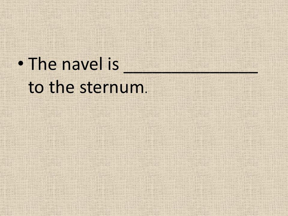 The navel is ______________ to the sternum.
