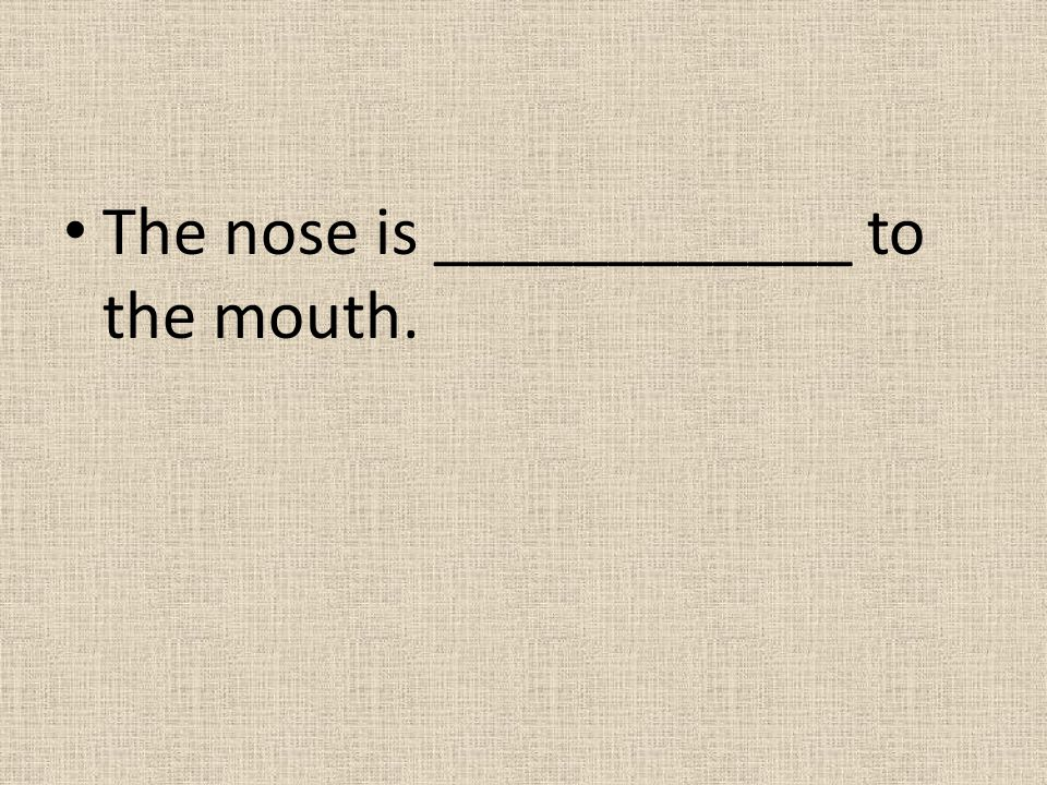 The nose is ____________ to the mouth.
