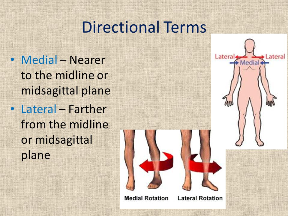 Directional Terms Medial – Nearer to the midline or midsagittal plane