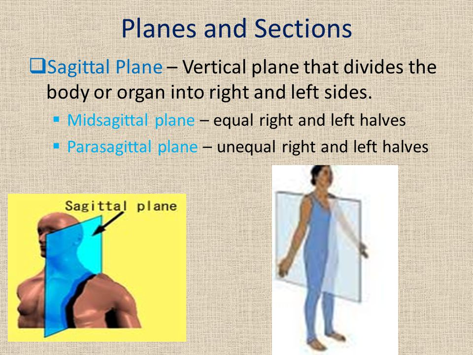 Planes and Sections Sagittal Plane – Vertical plane that divides the body or organ into right and left sides.