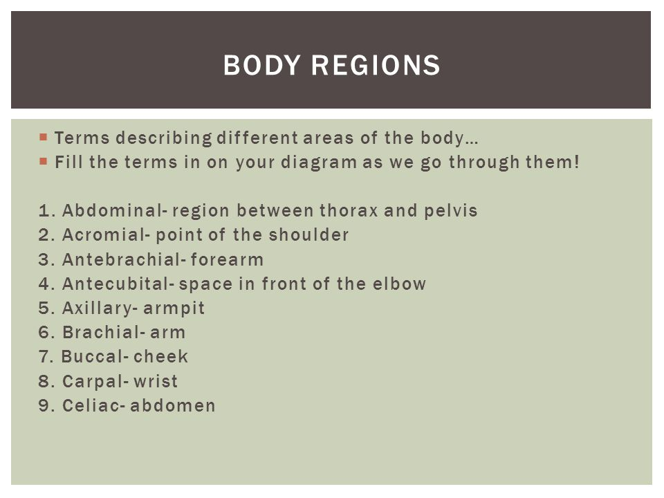 Body regions Terms describing different areas of the body…
