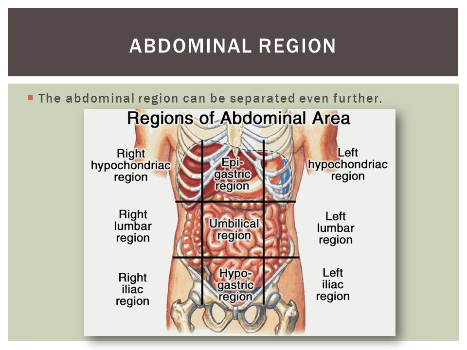 Abdominal region The abdominal region can be separated even further.