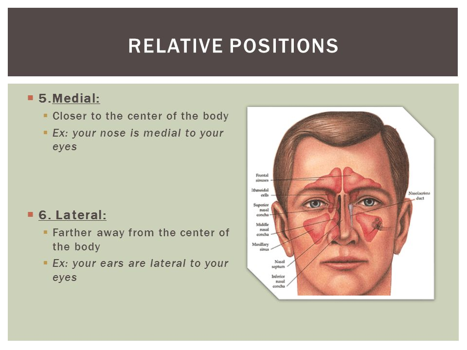 Relative positions 5.Medial: 6. Lateral: