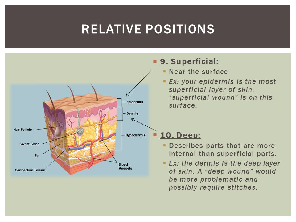 Relative positions 9. Superficial: 10. Deep: Near the surface