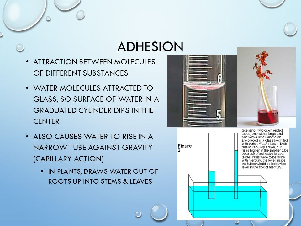 adhesion Attraction between molecules of different substances